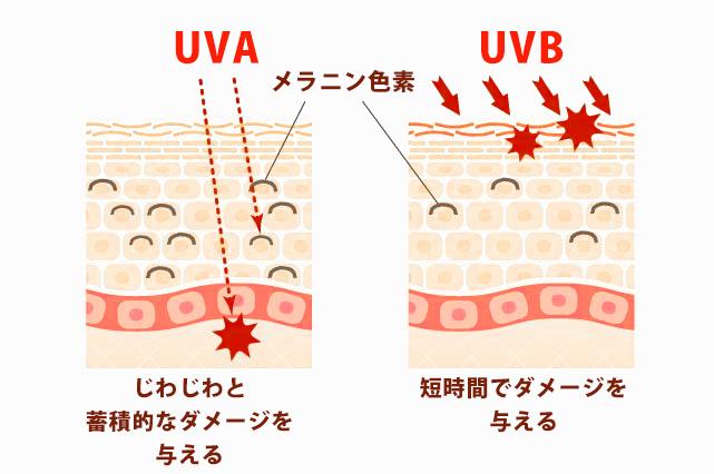 UVA、UVBの違い